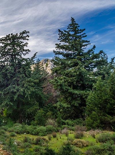 Mount Dikeos - Kefalovrisi In Kos Island